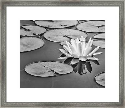 Lily And Dragon Fly Framed Print by Peg Runyan