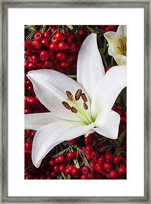 lily and Pyracantha Framed Print by Garry Gay