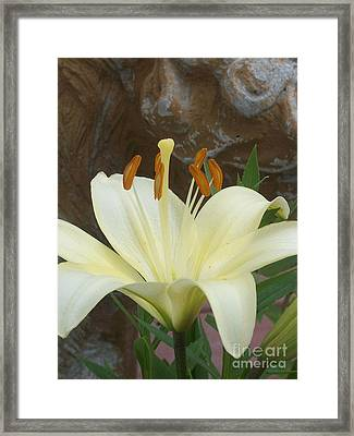 Lily And Rock Framed Print by Wide Awake Arts