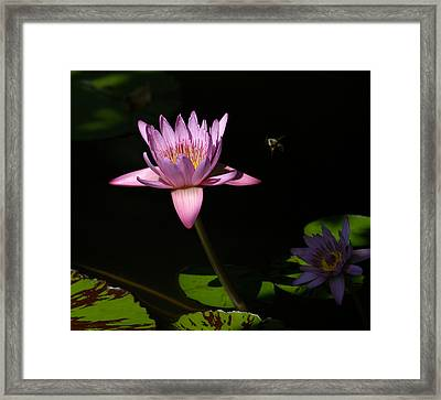 Lily And The Bee Framed Print by Yue Wang