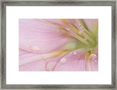 Lily And Waterdrops Framed Print by Melanie Viola