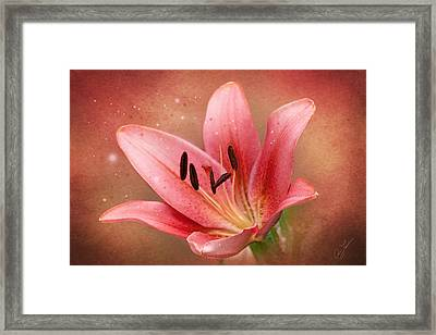 Lily Framed Print by Ann Lauwers