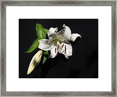 Framed Print featuring the photograph Lily At Daybreak by Nick Kloepping