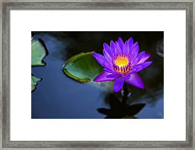 Framed Print featuring the photograph Lily Awakens by Dave Files