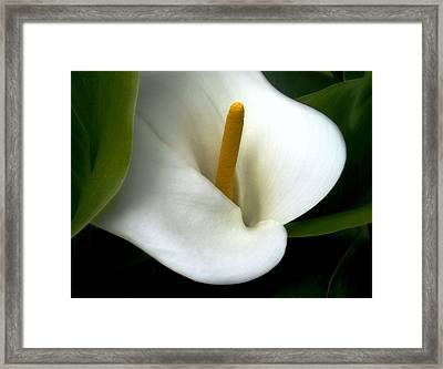 Lily Bright Framed Print