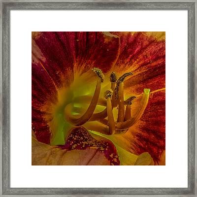 Lily Closeup Framed Print