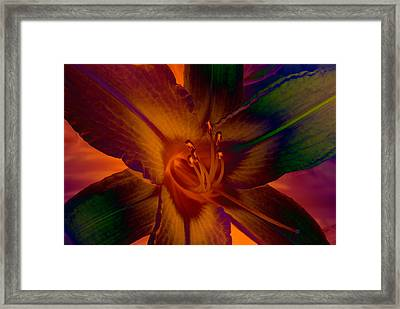 Framed Print featuring the photograph Lily Colors by WB Johnston