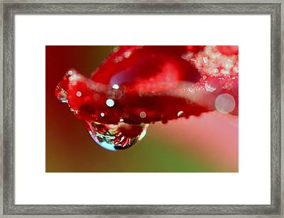 Framed Print featuring the photograph Lily Droplets by Suzanne Stout