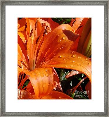Framed Print featuring the photograph Lily Drops by Kerri Mortenson