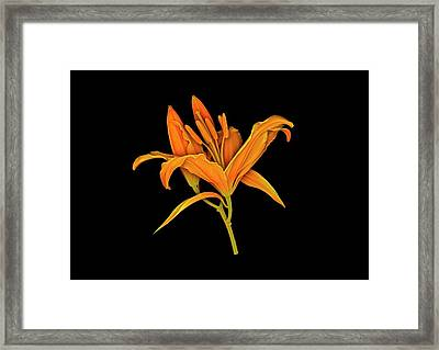 Lily Flower Framed Print by Dan Sykes/natural History Museum, London