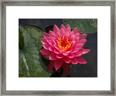 Framed Print featuring the photograph Lily Flower In Bloom by Michael Porchik
