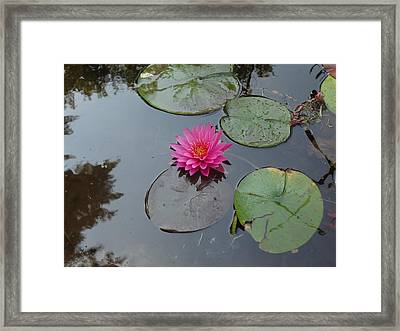 Framed Print featuring the photograph Lily Flower by Michael Porchik