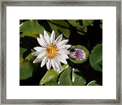 Lily Flowers Framed Print
