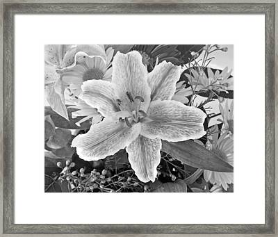 Lily Framed Print by Frank Winters