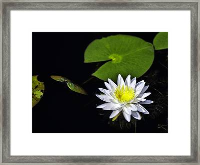 Lily From The Black Lagoon Framed Print by Frank Feliciano