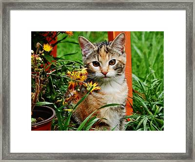 Framed Print featuring the photograph Lily Garden Cat by VLee Watson