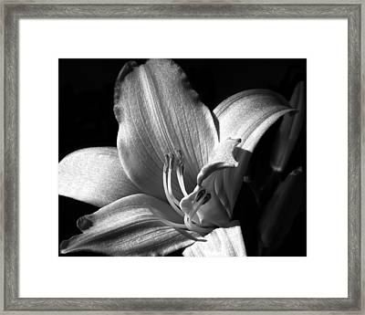 Lily Glisten Framed Print by Camille Lopez