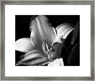 Lily Glisten Framed Print