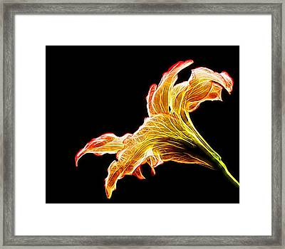 Lily Glow Framed Print by Judy Vincent