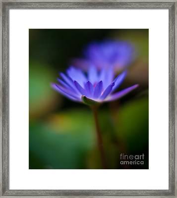Lily Glow Framed Print by Mike Reid