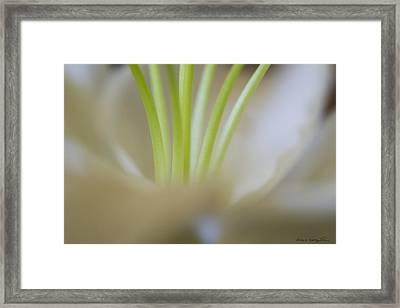 Framed Print featuring the photograph Lily II by Kathy Ponce