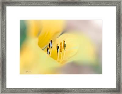 Lily Impressions Framed Print by Bob Orsillo