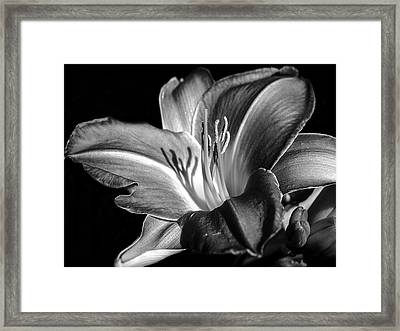 Lily In Black In White Framed Print by Camille Lopez