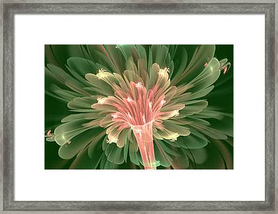 Lily In Bloom Framed Print