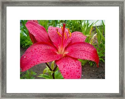 Lily In The Morning Framed Print by Adam Budziarek