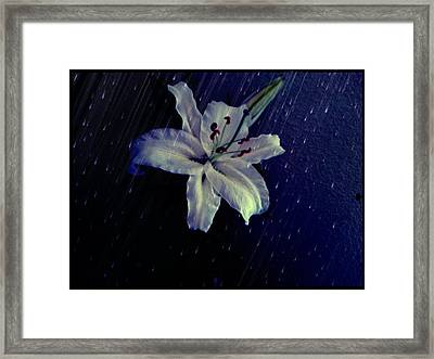 Lily In The Rain Framed Print by Terry Atkins