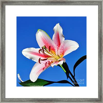 Lily In The Sky Framed Print by Kaye Menner