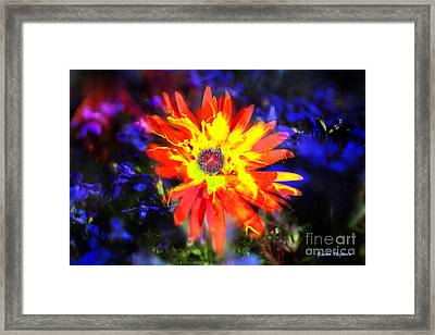 Framed Print featuring the photograph Lily In Vivd Colors by Gunter Nezhoda