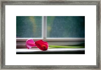 Lily In Window Framed Print by Tammy Smith