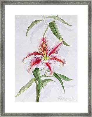 Lily Framed Print by Izabella Godlewska de Aranda