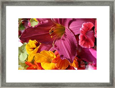 Lily Framed Print by Jeanette French