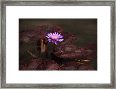 Lily At Dusk Framed Print by Jessica Jenney