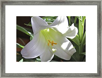 Lily Framed Print by Jim Gillen