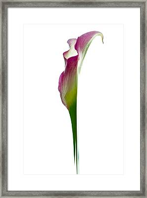 Framed Print featuring the photograph Lily by Jonathan Nguyen