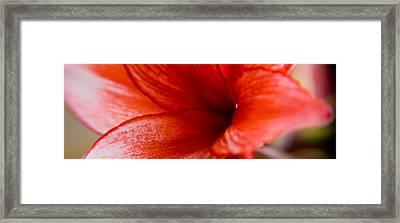 Lily Framed Print by Kim Lagerhem