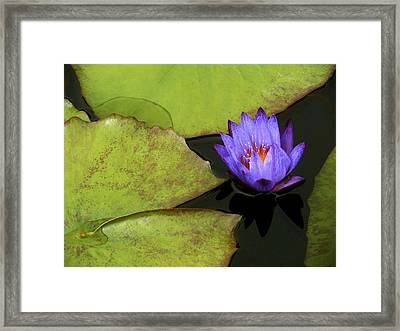 Lily- Leaves- And Love Framed Print