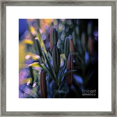 Lily Light Framed Print by Jean OKeeffe Macro Abundance Art