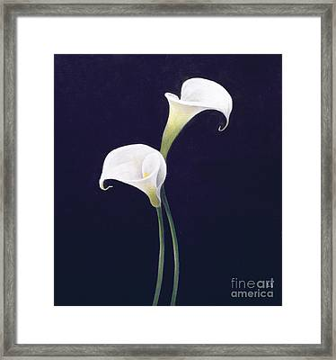 Lily Framed Print by Lincoln Seligman