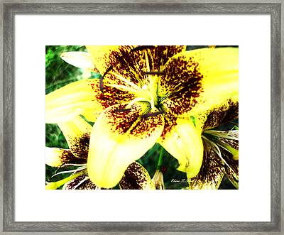 Framed Print featuring the photograph Lily Love by Shana Rowe Jackson