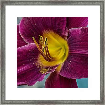 Lily Macro Framed Print