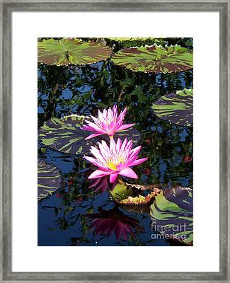 Lily Monet Framed Print by Eric  Schiabor