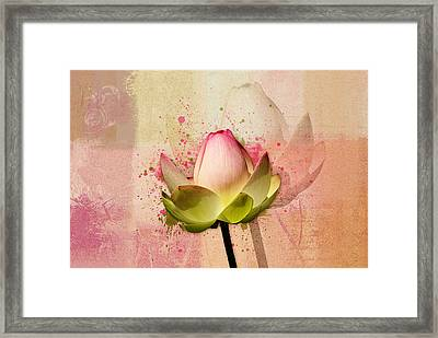 Lily My Lovely - S03c2 Framed Print by Variance Collections