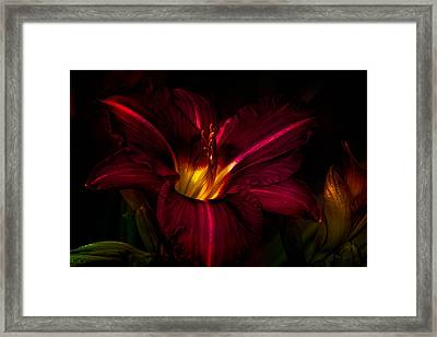 Lily Number Nine Framed Print
