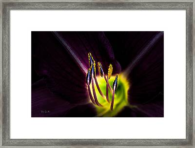 Lily Of The Forest Framed Print by Bob Orsillo
