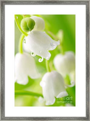Lily Of The Valley Framed Print by Boon Mee