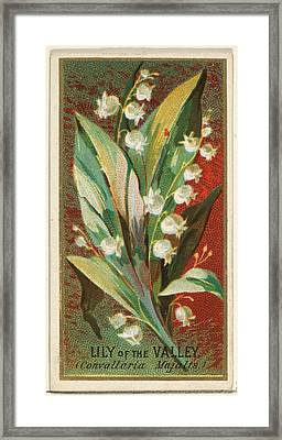 Lily Of The Valley Convallaria Majalis Framed Print